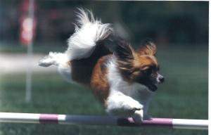 Tazzie Jump2